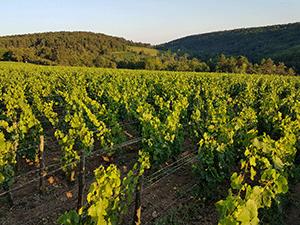 GFV Bourgogne